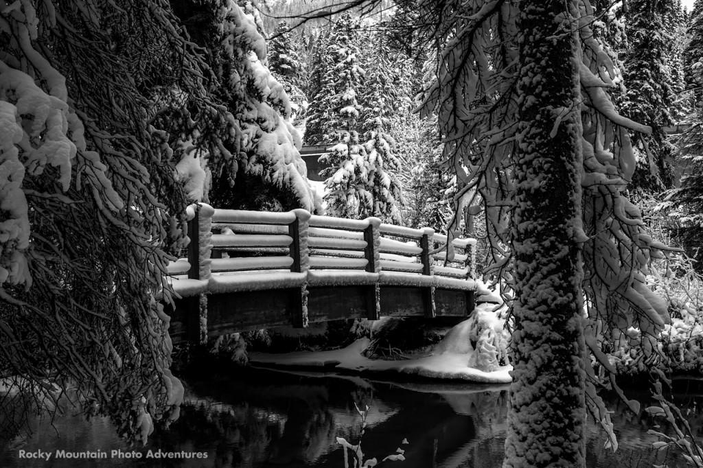 Fenlands Trail in Winter